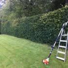 Long reach hedge cutting