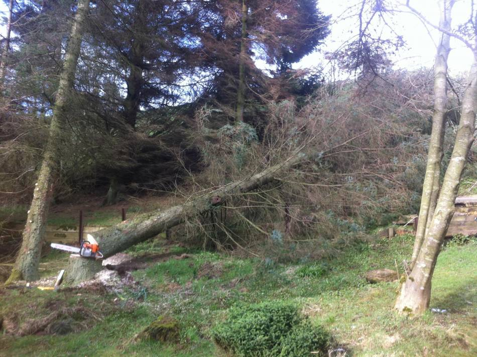 Tree Surgeons Amp Tree Cutting Services In Edinburgh And