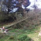 Safe professional tree felling